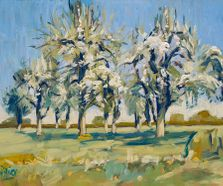 High trunk pear trees near Moorveld 40x30cm LR